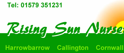 Rising Sun Nurseries Callington Cornwall